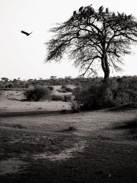 black and white landscape photo laurent breillat