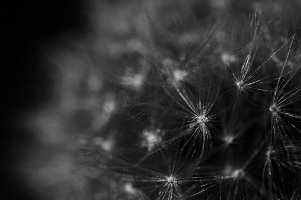 black and white macro photo