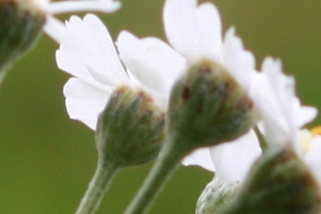 photo flower ISO sensitivity depth of field aperture ISO 100 noise