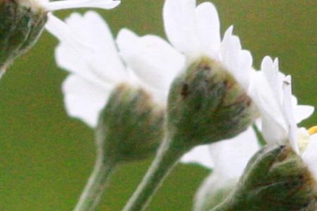 photo flower ISO sensitivity depth of field aperture 1600 ISO
