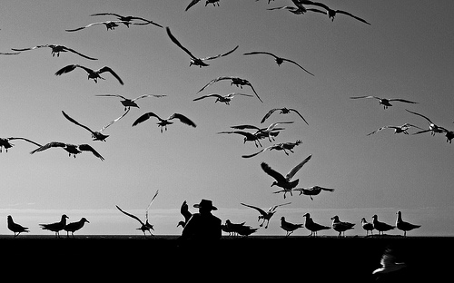 photo birds black and white sea man