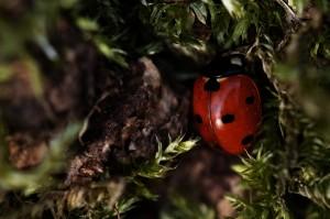 7-point ladybird macro photo lens