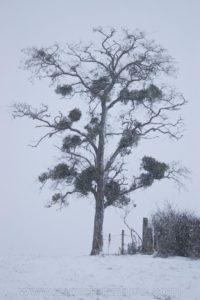 photo nature tree snow winter