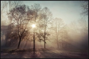 air photo arbre lumière rayons