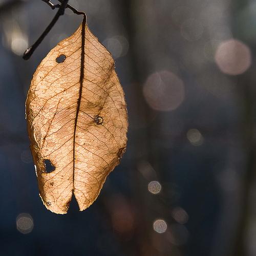 Autumn photo dead leaf