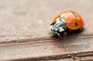 Photo Beetle tripod sharpness net