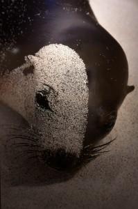 Animal Photo Seal