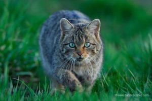 Pet picture cat