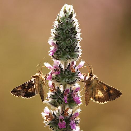 photo naturalist documentary butterflies Twin Mammals