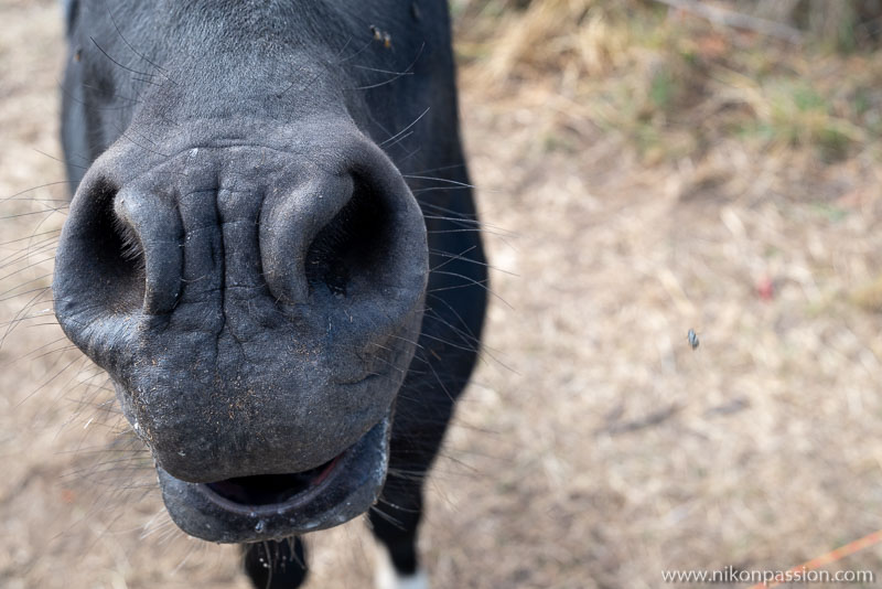 Donkey picture seen up close