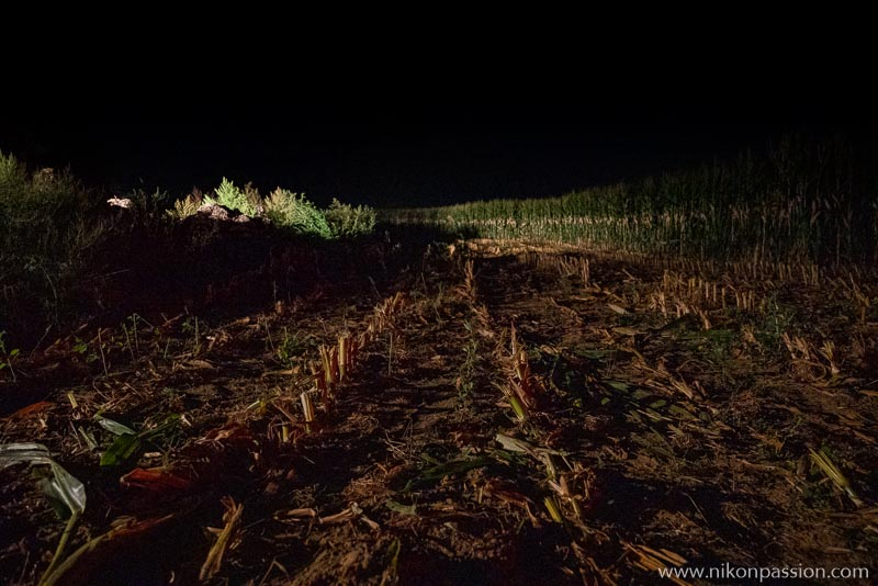 Corn silage at night in the Meuse region