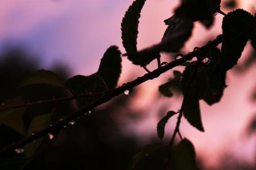 photo light golden hour Sunset aperture depth of field
