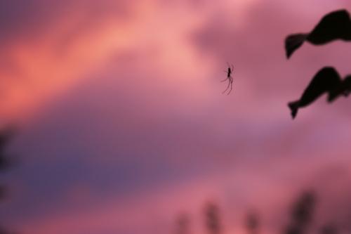 Photo Spider at sunset light