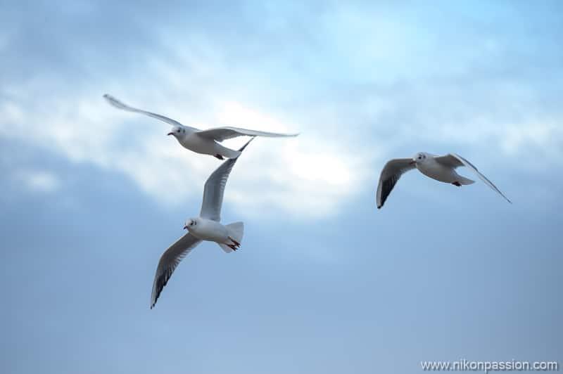 Nikon Hybrid Bird Photography Autofocus